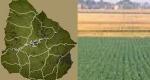 Según CRA, productores y empresas locales de agro están dirigiendo inversiones a Uruguay.
